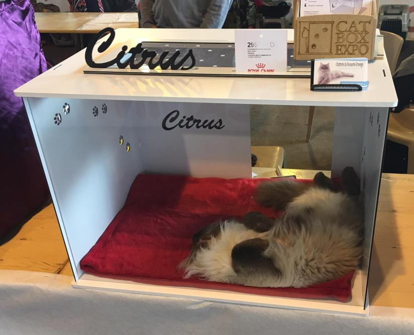 cambrai-cat box expo